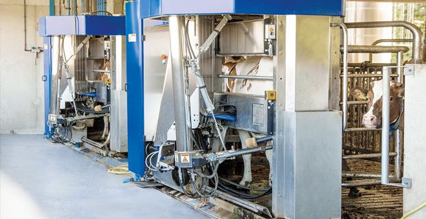 BOGE Scrollkompressoren angeschlossen an einer Melkanlage für Milchkühe